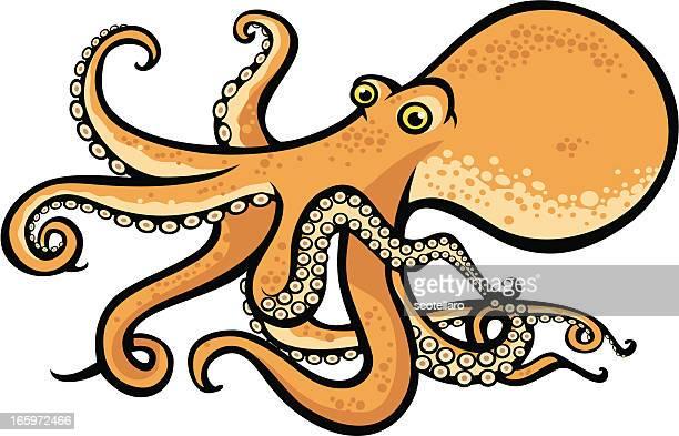 Sea creatures, octopus