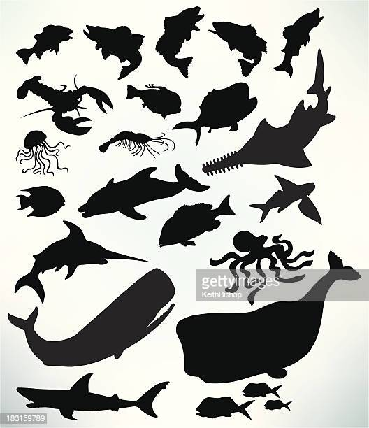 Sea Life - Fish, Shark, Whale, Lobster, Jellyfish