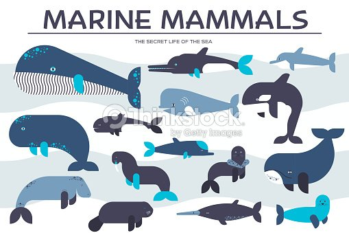 sea mammals animal collection icons set vector fish illustration in