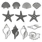 Sea shells and starfish vector set. Shell sea, shell starfish ocean, nature marine shell illustration