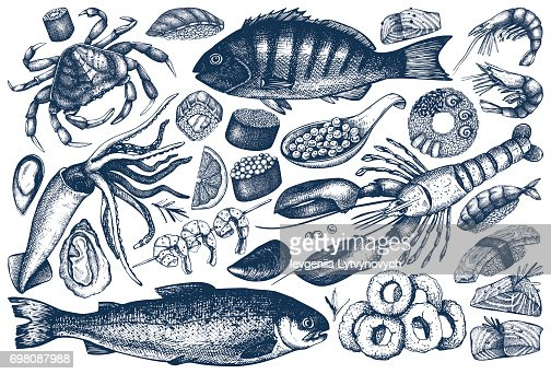 collection de contours de fruits de mer : clipart vectoriel