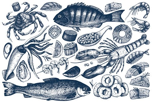 seafood outlines collection : stock vector