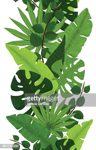 Seamless Border of Monstera, Banana, Ficus and Palm Leaves : stock vector