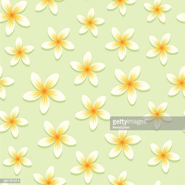 Nahtlose Muster mit Frangipani (Plumeria