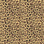 Leopard seamless pattern design, vector illustration backgroundd