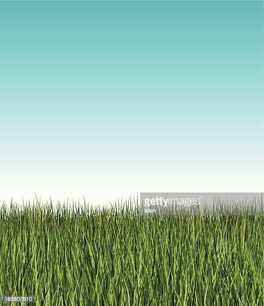 seamless long grass banner