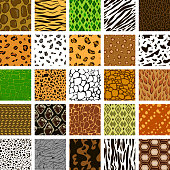 Set of seamless pattern of different animal skin in vector