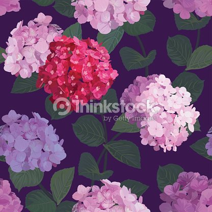 Seamless pattern of hydrangea flowers with purple background.