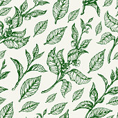 Trendy seamless pattern of green leaves, flowers of tea bush on white background. Realistic. Organic product. Vector black silhouette Sketch style. Real life eps.10