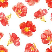 Vector illustration of floral seamless. Red isolated flowers on a white background, drawing watercolor.