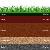 Seamless named soil layers with green grass on top. The stratum of organic, minerals, sand, clay, silt, parent rock and unweathered parent material.