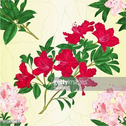 Texture Transparente Branche Lumineuse Rose Et Rouge Fleurs