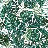 seamless vector green graphical artistic tropical nature jungle pattern on white, modern stylish foliage background allover print with split leaf, philodendron, palm leaf, fern frond