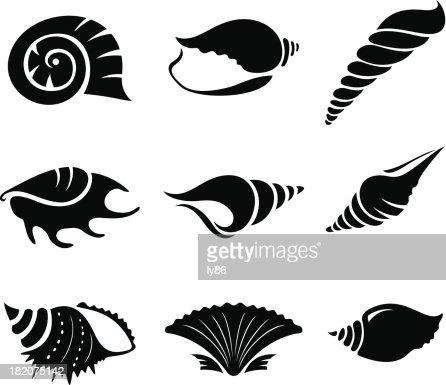 Seashells Vector Art | Getty Images