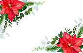 Seasonal angle floral frame with mixed bouquets of red poinsettia, fir branch, parvifolia eucalyptus, salal on white background. Christmas banner. Vector card. All elements are isolated and editable