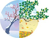 Cartoon illustration representing the cycle of the four seasons.