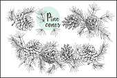 Set card template with pattern realistic botanical ink sketch of fir tree branches with pine cone on white background Good idea for invitations, greeting postcards, label, sticker Vector illustrations