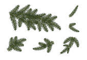 set: Xmas tree branches.  Christmas and Happy New Year dГ©cor . Isolated without a shadow. Fir tree branches.vector illustration. Eps 10