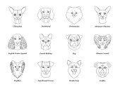 set, collection of isolated black outline head of chihuahua dachshund, papillon, spitz, pug, miniature pinscher welsh corgi french bulldog griffon on white background. Line cartoon breed dog portrait