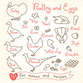 Set drawings of poultry and egg for design menus, recipes. Poultry meat chicken, turkey, goose, duck, quail, pheasant. Vector illustration.