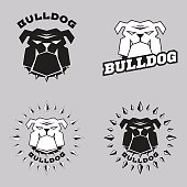 Set icons bulldog head. Vector illustration head ferocious bulldog