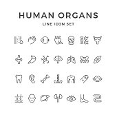Set line icons of human organs isolated on white. Vector illustration
