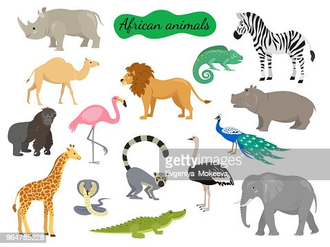 Set of african animals on white background. : stock vector