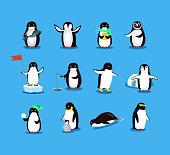 Set of animal penguin design flat. Penguin bird, penguin vector, animals winter, penguin isolated, animal penguin, cartoon penguin, polar penguin in scarf, wild penguin character illustration