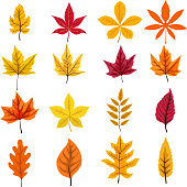 set of autumn leaves isolated on white background. Vector design element