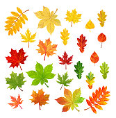 Set of autumn leaves isolated on white background. Vector illustration.