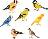 Set of colorful birds, isolated vector illustration. Goldfinch, thrush, canary, siskin, tit, finch, budgie decorate cards or other design