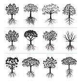 Set of Black Trees and Roots. Vector Illustration