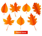 Set of colorful autumn leaves on white background.