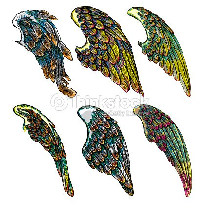 7a09dc74e Set of colourful bird wings of different shape in open position isolated on  white background. Colorful angel wings hand drawing sketch.