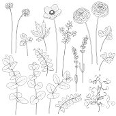 Set of leaves and flowers. Contoured image of plants. Black and white floral elements for coloring.