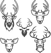 set of deer heads isolated on white background. Design elements for label, emblem, sign, brand mark. Vector illustration.