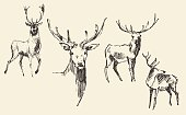 Set of deers engraving style vintage illustration hand drawn sketch