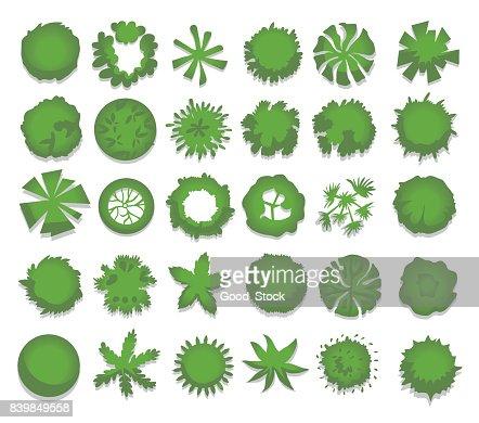 Conjunto de diversos árboles verdes, arbustos, setos. Vista superior para proyectos de diseño de paisaje. Ilustración vectorial, aislado sobre fondo blanco. : Arte vectorial