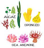 Set of different species of sea anemones, sponges, marine algae on white background