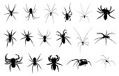 Set of different spiders isolated