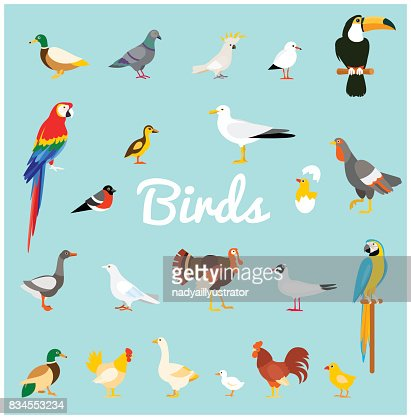 A set of domestic and wild birds in a flat style. : stock vector