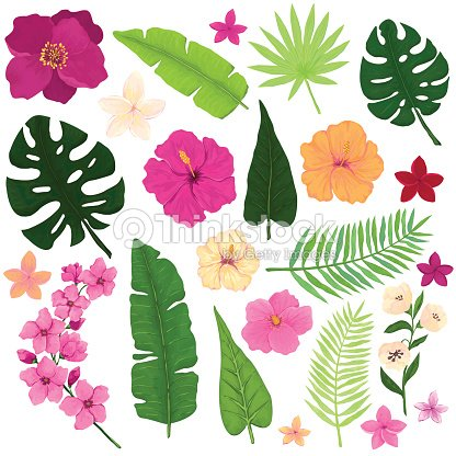 Set Of Exotic Tropical Flowers And Leaves Stock Vector Thinkstock