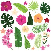Floral Set of Exotic Tropical Flowers and Leaves
