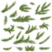 Set of Fir Branches. Christmas Tree. Vector Illustration.