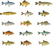 Set of fish on a white background
