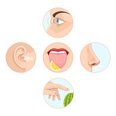 Set of five senses man. Anatomy, human organs. Nose - smell, eyes - vision, ears - hearing, skin - touch, language - taste and taste buds. Perception of environment, sensations. Vector illustration.
