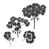 Monochrome variants of geranium. Can be used as a design element. Hand drawn vector illustration, sketch.