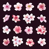 Set of different beautiful cherry tree flowers isolated on black background. Big collection of pink, purple, white sakura blossom - japanese cherry tree.  Elements of floral spring design. Vector illu