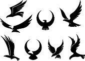 Setof black silhouettes of graceful flying eagles with their outspread wings for heraldry and hunting design