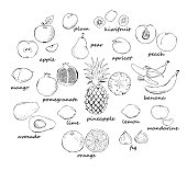 Collection of doodle fruit isolated on white background. Vector illustration